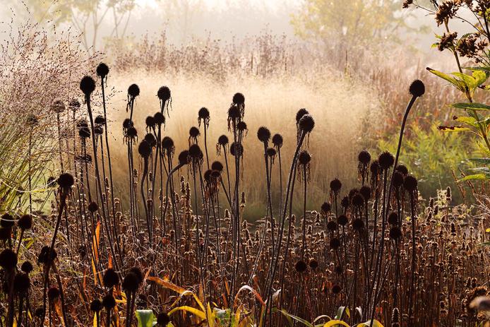 отцветавшие растения