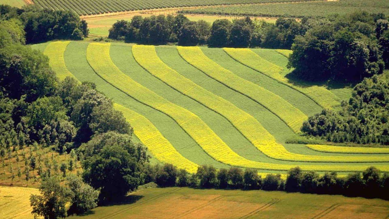 полоски на поле